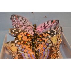 Schmetterlings Set XL