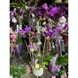 Orchidee Arrangements