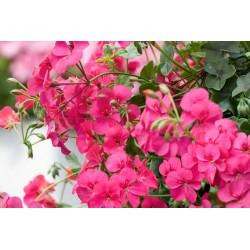 Halbhänger rosa